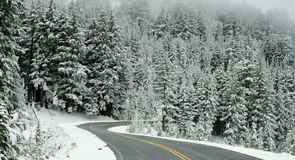 Clear road in a snowy forest